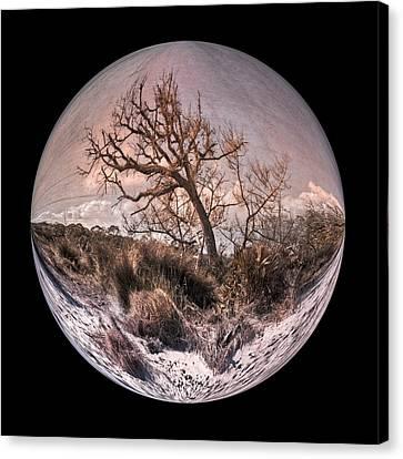 Windswept At Driftwood Beach II Canvas Print by Debra and Dave Vanderlaan