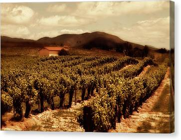 Wine Country Canvas Print by Peter Tellone