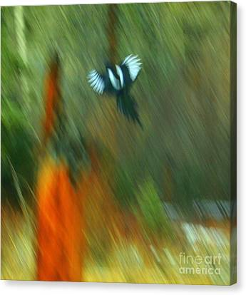 Wings Canvas Print by Julie Lueders