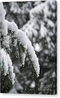 Winter Charm Canvas Print by Gwyn Newcombe