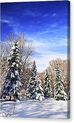 Winter Forest Under Snow Canvas Print by Elena Elisseeva