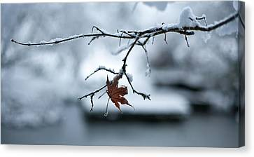 Winter Solo Canvas Print by Mike Reid