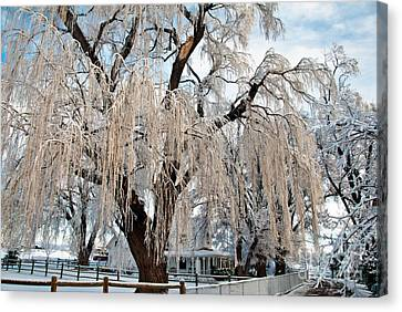 Winter Willow Canvas Print by Harry Strharsky