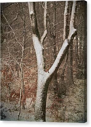 Winter Woods Canvas Print by Odd Jeppesen