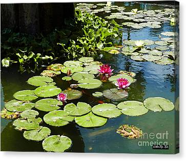 Wishes Among The Water Lilies Canvas Print by Methune Hively