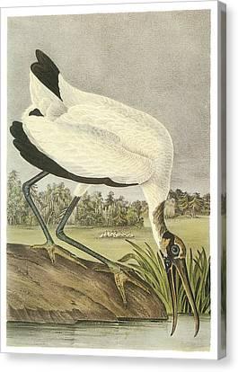 Wood Stork Canvas Print by John James Audubon