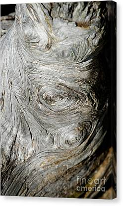 Wooden Fingerprint Eddies In The Grain Of An Old Log Like Whorls On A Finger Canvas Print by Andy Smy