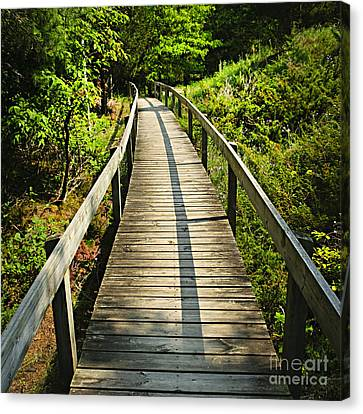 Wooden Walkway Through Forest Canvas Print by Elena Elisseeva