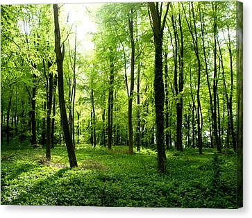 Countryside Canvas Print featuring the photograph Woods 3 by Roberto Alamino