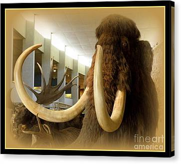 Wooly Mammoth Canvas Print by Lainie Wrightson
