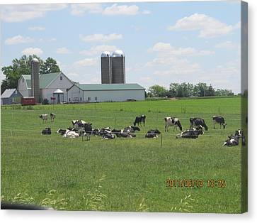 Working Milk Farm Canvas Print by Tina M Wenger