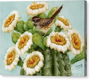 Wren And Saguaro Blossoms  Canvas Print by Summer Celeste