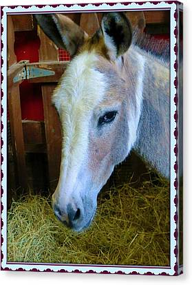 Yahoo The Mule Canvas Print by Mindy Newman