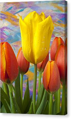 Yellow And Orange Tulips Canvas Print by Garry Gay