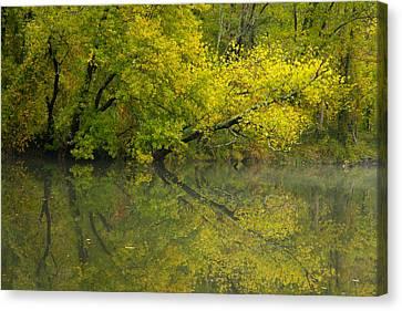 Yellow Autumn Canvas Print by Karol Livote
