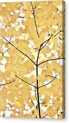Yellow Brown Leaves Melody Canvas Print by Jennie Marie Schell