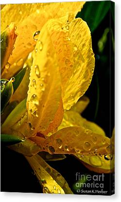Yellow Canna Lily Canvas Print by Susan Herber