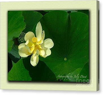Yellow Lotus Blossom In Mississippi  Canvas Print by Julie Dant