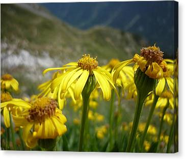 Yellow Mountain Flowers Canvas Print by Martin Marinov