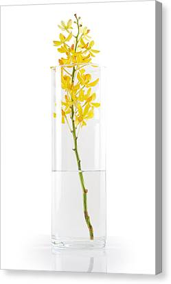 Yellow Orchid In Vase Canvas Print by Atiketta Sangasaeng