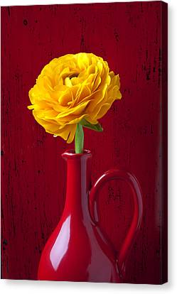Yellow Ranunculus In Red Pitcher Canvas Print by Garry Gay