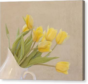 Yellow Tulips Canvas Print by Kim Hojnacki