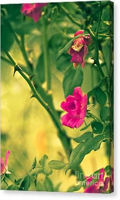 Yesterday In The Garden Canvas Print by Kim Henderson