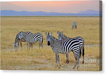 Zebras In The Morning Canvas Print by Pravine Chester