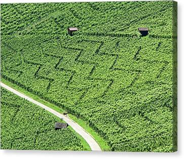 Zig-zag In Vineyards Canvas Print by Ursula Sander