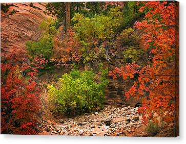Zion Fall Colors Canvas Print by Dave Dilli