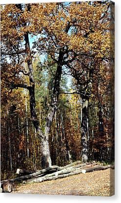 Autumn In Forest Canvas Print by Henryk Gorecki