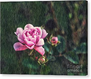 . Flower And Rain . Canvas Print by SK Pfphotography