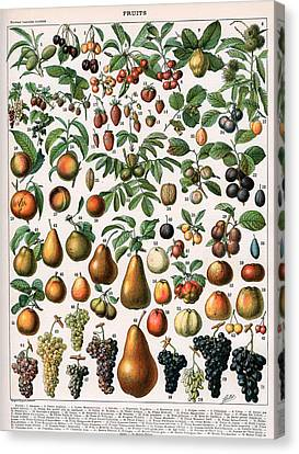 Illustration Of Fruit Varieties Canvas Print by Alillot