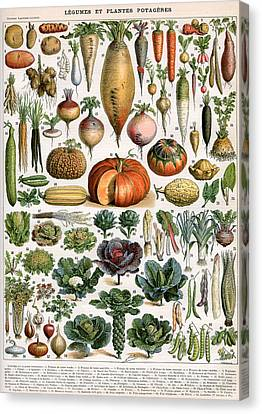 Illustration Of Vegetable Varieties Canvas Print by Alillot