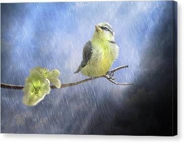 Little Sunshowers Canvas Print by Trudi Simmonds
