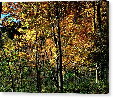 Michigan Fall Colors 2  Canvas Print by Scott Hovind