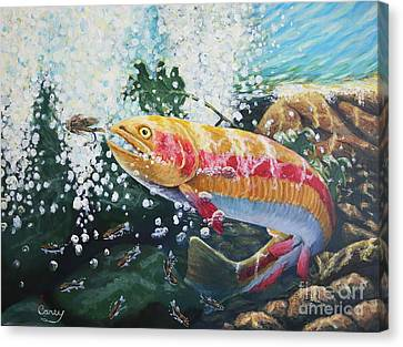 Not Your Average Goldfish Canvas Print by Carey MacDonald