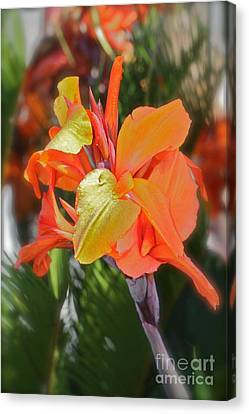 Orange Bright Canvas Print by Maureen J Haldeman