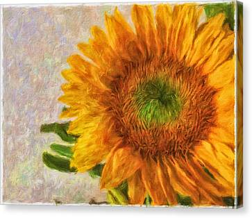 Sunflower 2 Canvas Print by Jonathan Nguyen