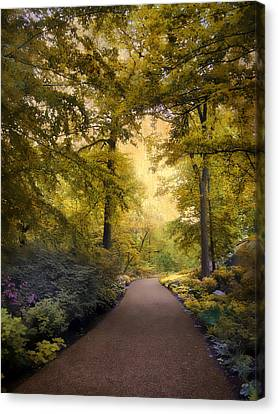 The Golden Walkway Canvas Print by Jessica Jenney