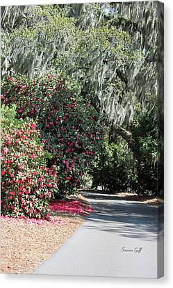 A Lowcountry Springtime Canvas Print by Suzanne Gaff