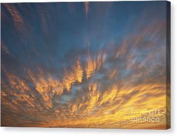 A New Dawn Canvas Print by Tim Gainey