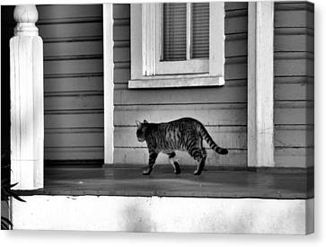 Across The Porch Canvas Print by Jan Amiss Photography