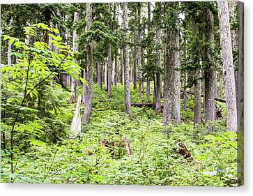 Alpine Forest-2 Canvas Print by Claude Dalley