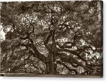 Angel Oak Live Oak Tree Canvas Print by Dustin K Ryan