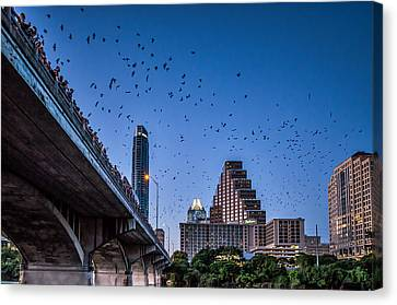 Austin Bat Watch Canvas Print by Tod and Cynthia Grubbs