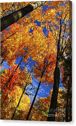 Autumn Forest Canvas Print by Elena Elisseeva