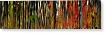 Autumn Glory  Canvas Print by Andrea Kollo
