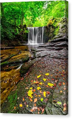 Autumn Leaves Canvas Print by Adrian Evans