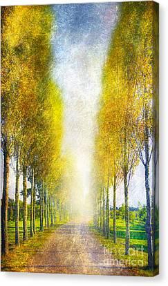 Autumn Trees Canvas Print by Svetlana Sewell